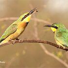 Open wide !  Little Bee-eater Merops pusillus by Magriet Meintjes