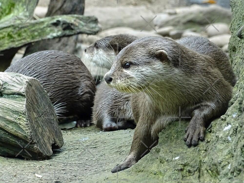 Otter by Steven Guy