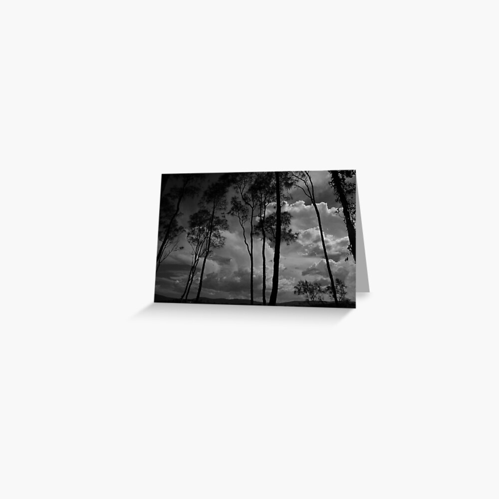 Whispering Trees - Coomba Park NSW Greeting Card