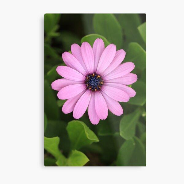 Purple flower showing stamen & pistils Metal Print