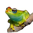 Bright-eyed Tree Frog (Boophis rappiodes) by MyFrogCroaked