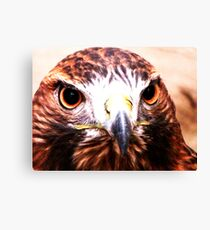 Andi- The Golden Eagle Canvas Print