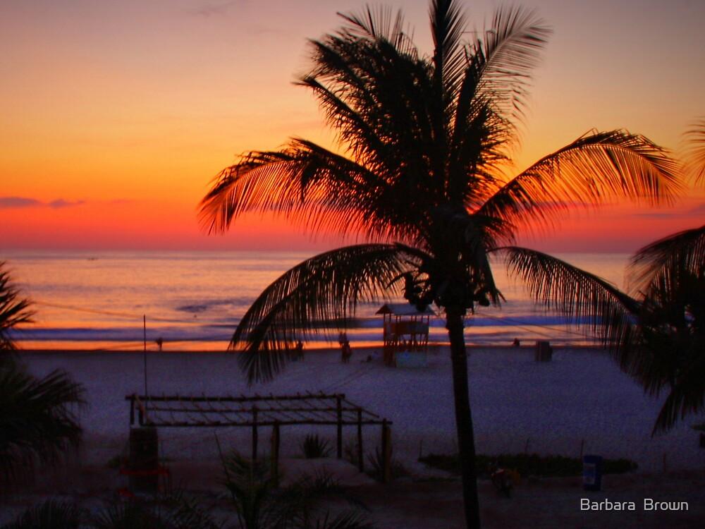 Tropical Beach Sunset by Barbara  Brown