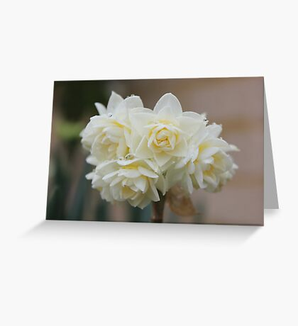 1st Flowers Of Spring Greeting Card