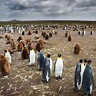 Penguin Colony by Ben Goode
