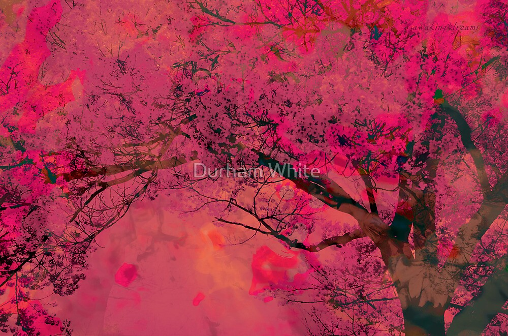the everlasting sunset... crimson skies edit by Durham White