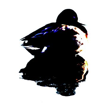 Beautiful duck in silhouette by derbyshireduck