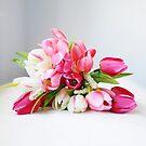 Bloom by Stephanie Hillson