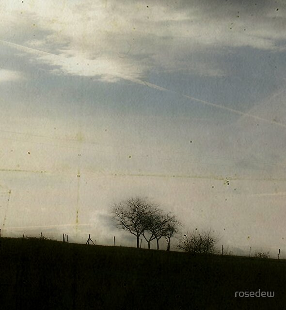Lines by ROSE DEWHURST