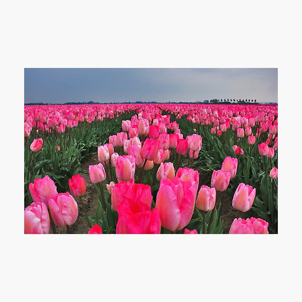 Colors of Spring 8 Photographic Print