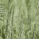 Grow, grow . . . by Bonnie T.  Barry