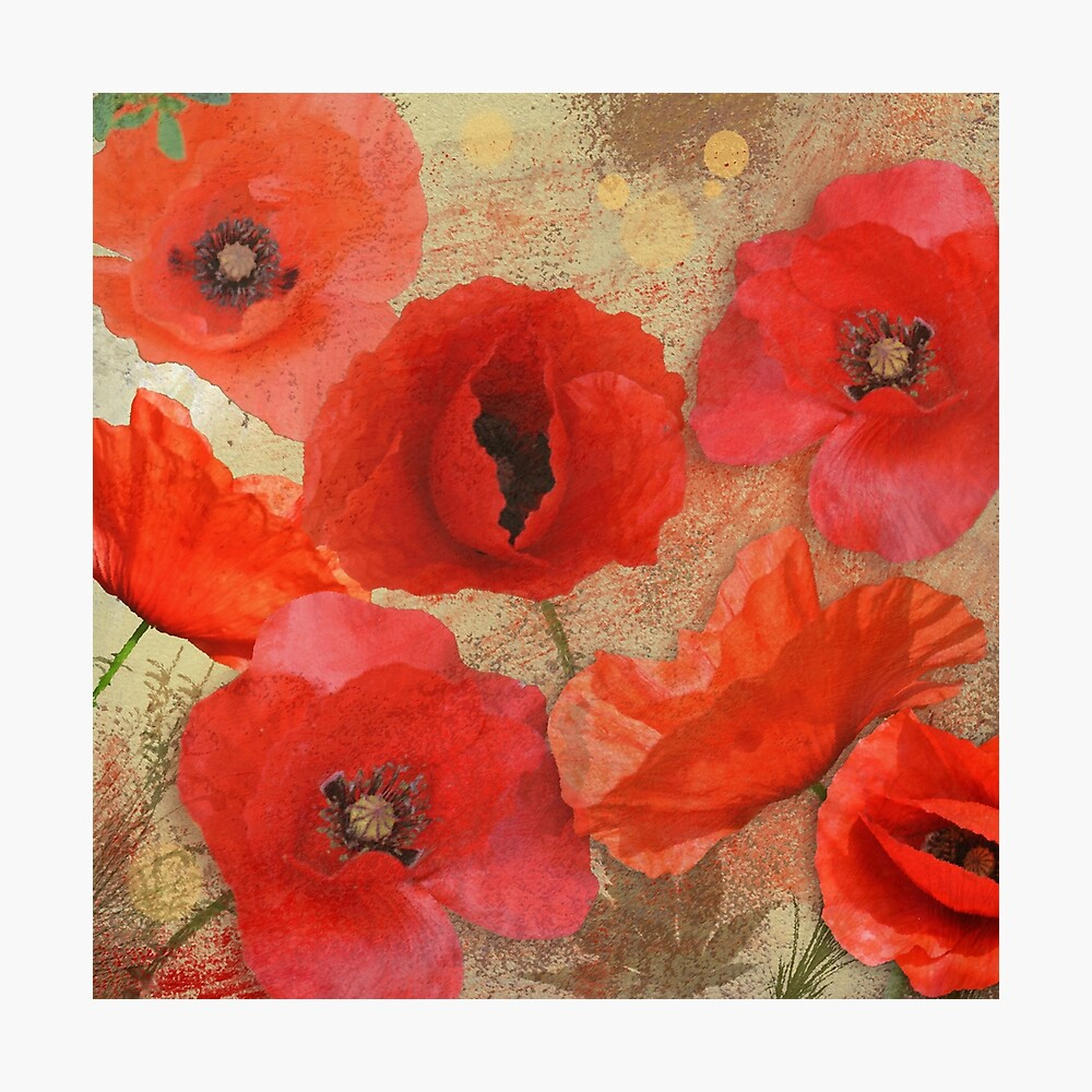 Red as poppies can be Photographic Print