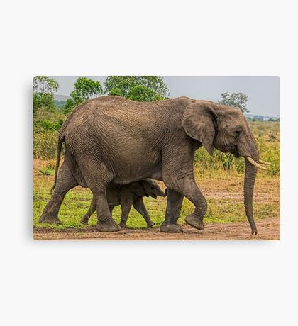 Elephants - Baby with Mother Canvas Print