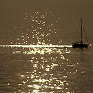 moonlight glide by Stuart Thorpe