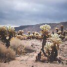 cactus garden by bellehibou