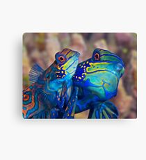 Mating Mandarins Canvas Print