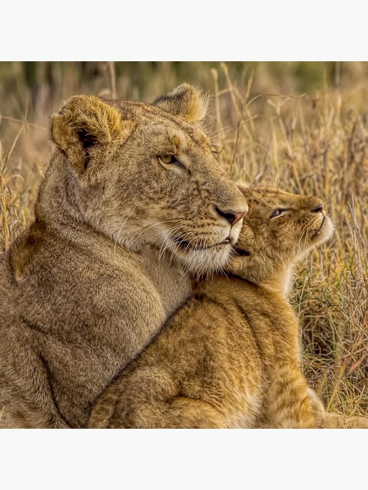 Lion Baby mit Mutter von henryjager