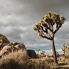 joshua tree by bellehibou