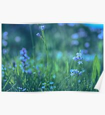 Blue Spring Flowers Poster