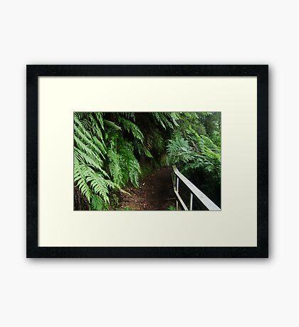 Tramline Walkway, Walhalla Framed Print