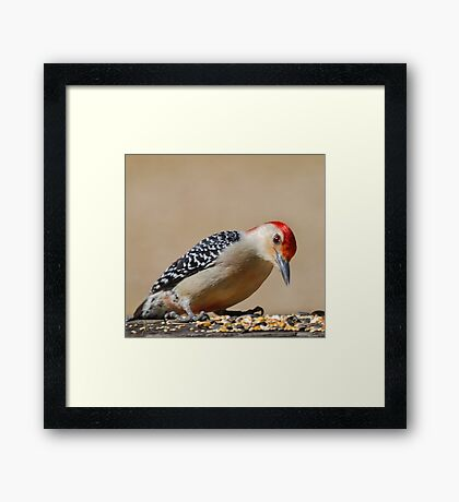 Male Redbellied Woodpecker Framed Print