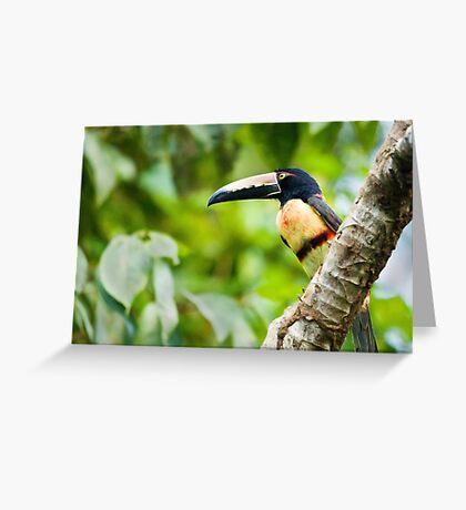 Collared Aracari Toucan Greeting Card