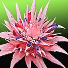 Pink & Purple bromeliad Flower Card by JuliaKHarwood