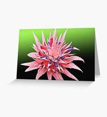 Pink & Purple bromeliad Flower Card Greeting Card