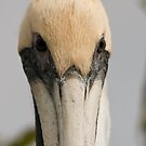 Pelican Close Up by Karen  Moore