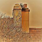 Semi Detached Irish Chimneys by Fara