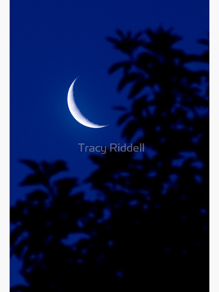 New Moon by taos