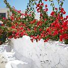 Spring In Santorini by Mary Grekos