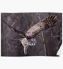 Dark Side Of  The Woods/ Great Gray Owl Poster