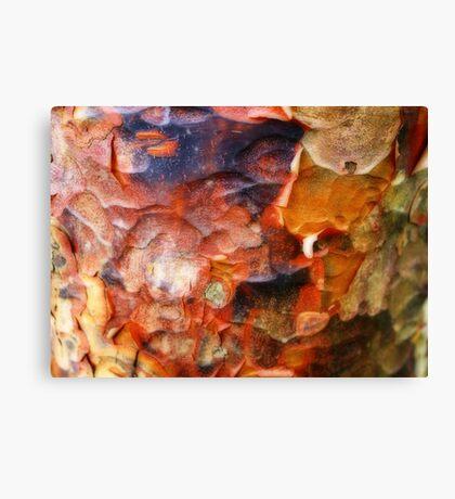 Ornamental Bark Canvas Print