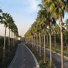 Palms Along Disney Way by TLCGraphics