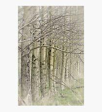 Dancing Trees Photographic Print