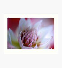 Glowing White Protea Art Print
