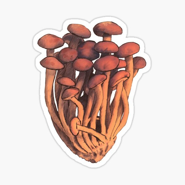 Pioppini mushroom  Sticker