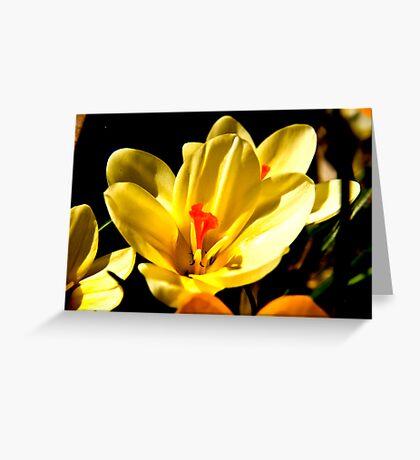 Spring Flowers #2 Greeting Card