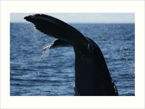 «Cola de ballena jorobada» de DanaAndTheBooks