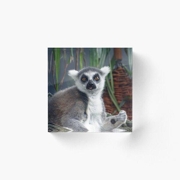 Ring Tailed Lemur Acrylic Block
