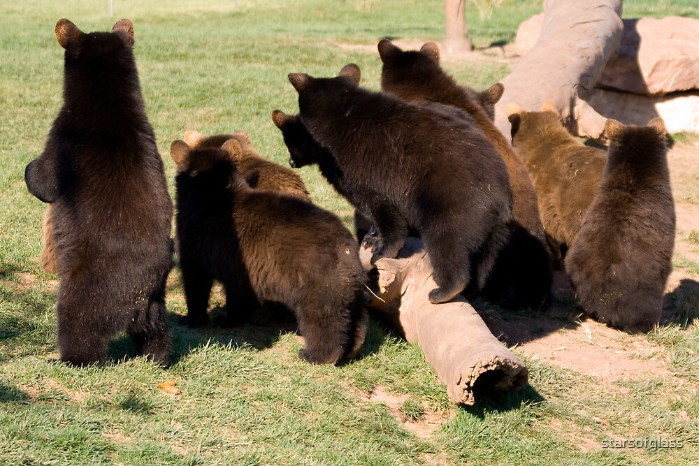 Bear cub behinds by starsofglass