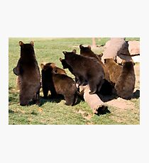 Bear cub behinds Photographic Print
