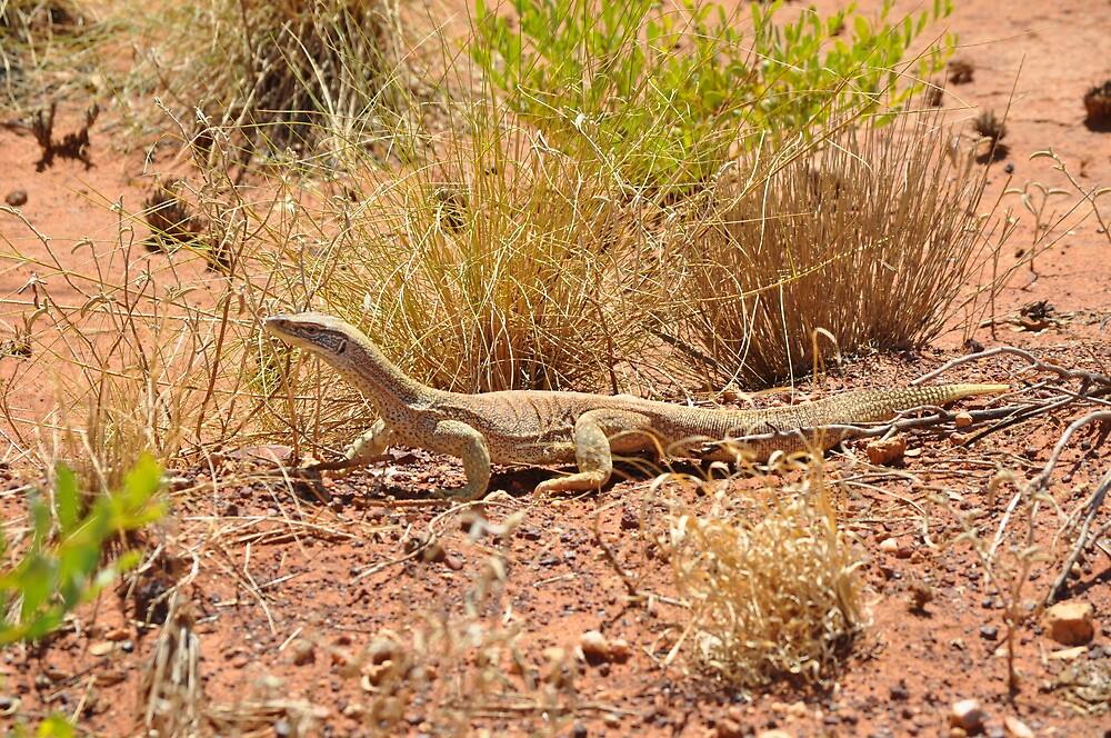 Sand Goanna (Varanus gouldii flavirufus), Tanami Desert, Northern Territory by sahoaction