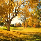 A Late Autumn Afternoon by John  De Bord Photography