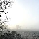 foggy, frosty field in winter morning light by brilliantbeings