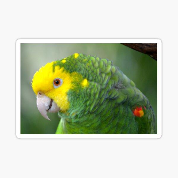 Yellow Headed Amazon Parrot Sticker