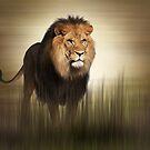 King by shalisa