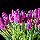 All Bunched Up by Lynne Morris
