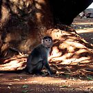 Indian Monkey by rocamiadesign